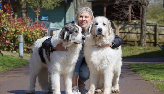 Olympic swimmer and TV personality Sharron Davies wants local business people to sign up to the Bath Cats and Dogs Home Kennel Challenge which takes place on June 10th 2016. Sharron gets to grips with a pair of Pyrenean Mountain Dogs, Brooke (left) and Shadow. Photo by Tim Gander